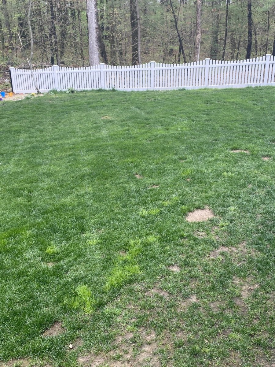 1_Poa-Trivialis-patches-in-cool-season-lawn