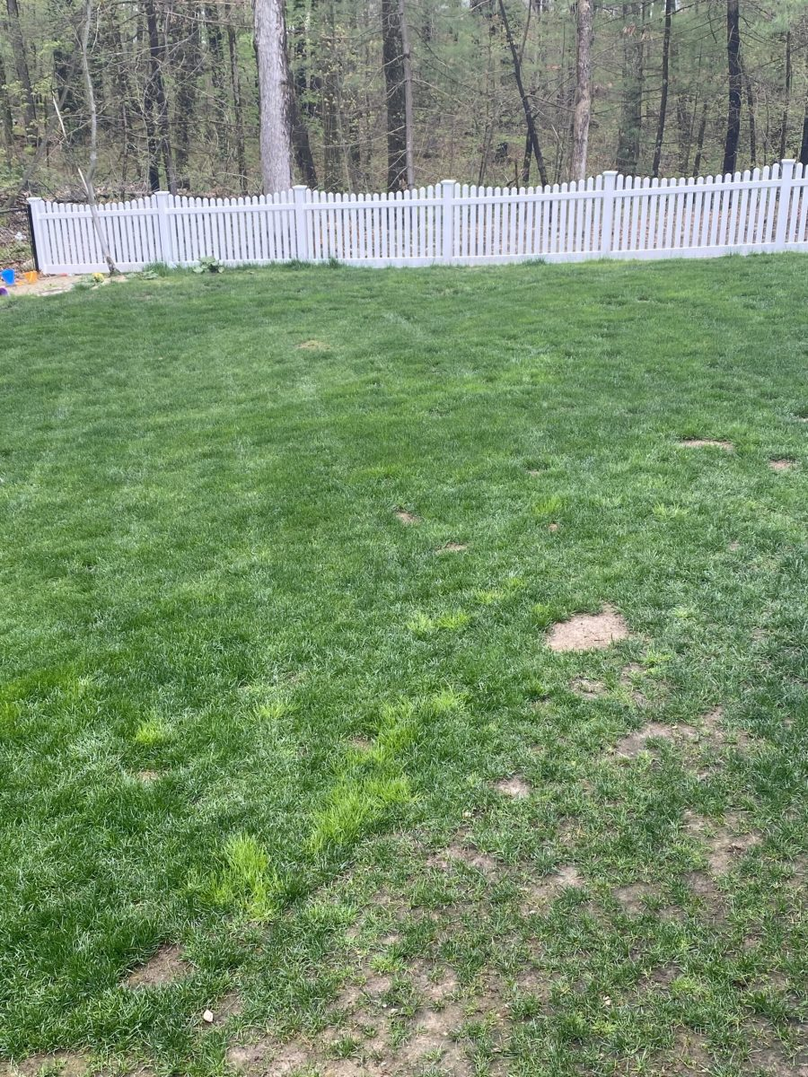 Poa-Trivialis-patches-in-cool-season-lawn-scaled