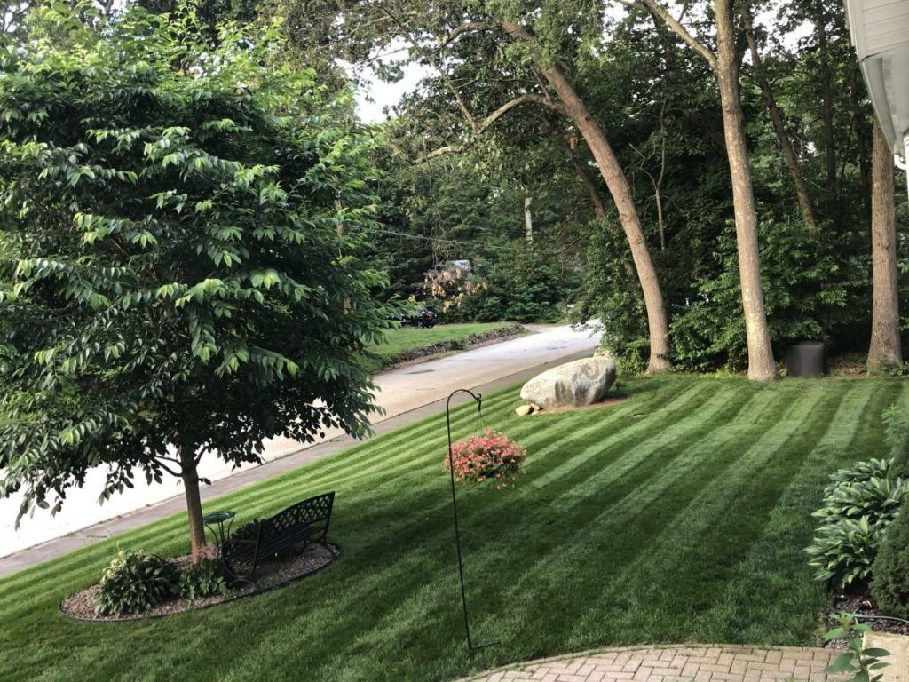 Jonathan Green July 2019 Show Us Your Lawn Contest Winner