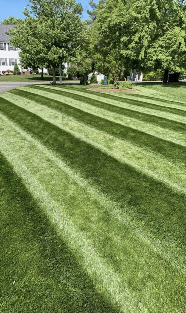 Michael S - Lawn of the Month Winner