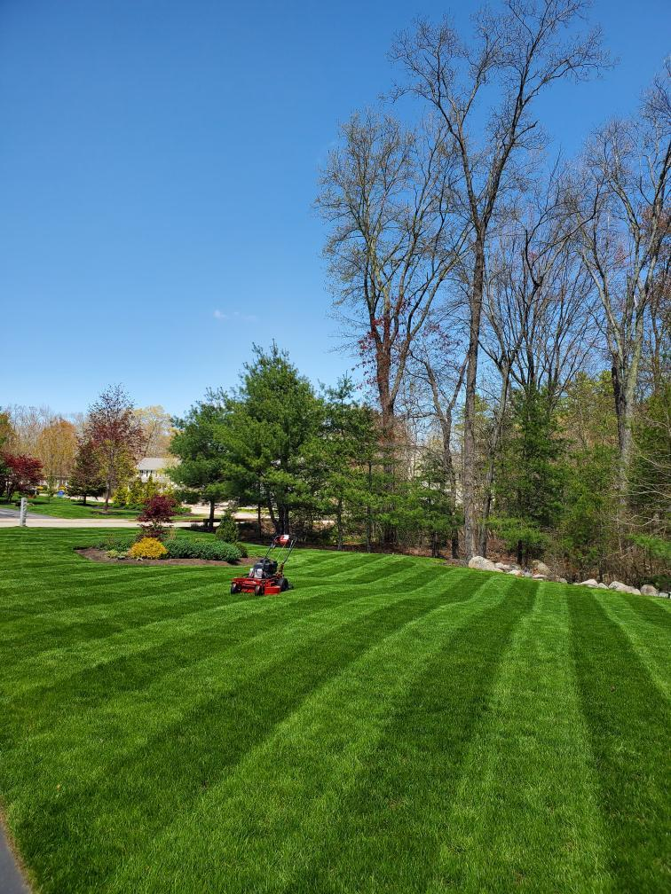 Lush Lawn in August
