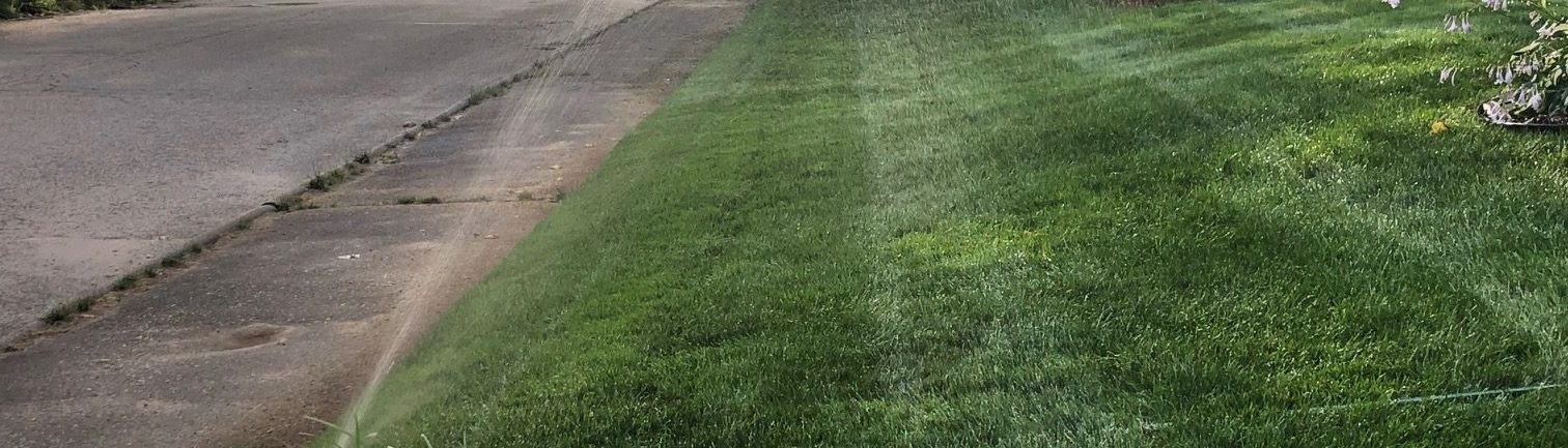 thick-healthy-lawn